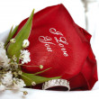 Red Rose that says I Love You - Stock Photo