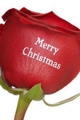 Beautiful Red Rose with Merry Christmas written on it — Stok fotoğraf
