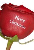 Hermosa rosa roja con feliz navidad escrito — Foto de Stock