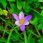 Осенний цветок — Стоковое фото