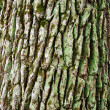 The bark — Stock Photo