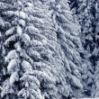 Stock Photo: Winter forest
