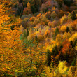 Golden forest — Foto Stock