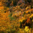 Golden forest — Stockfoto