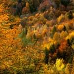 金色森林 — 图库照片