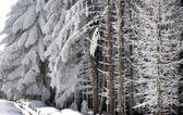 Snow on the branches — Stock Photo