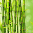 Bamboo — Stock Photo #5977641