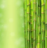 Bamboo — Stock Photo