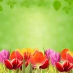 Poppy flowers in grass — Stock Photo