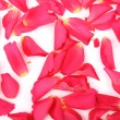 Abstract background of pink rose petals - Stock Photo