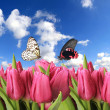 Fresh dewy purple tulips with butterflies - Stock Photo