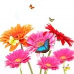 Spring romance — Stock Photo #6019534