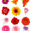 FLower collection - Stock Photo