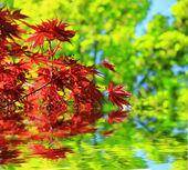 природа фон — Стоковое фото