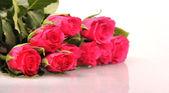 白地に赤いバラの花 — ストック写真