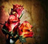 цветение роз — Стоковое фото