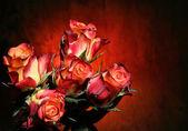 Roses — Stock fotografie