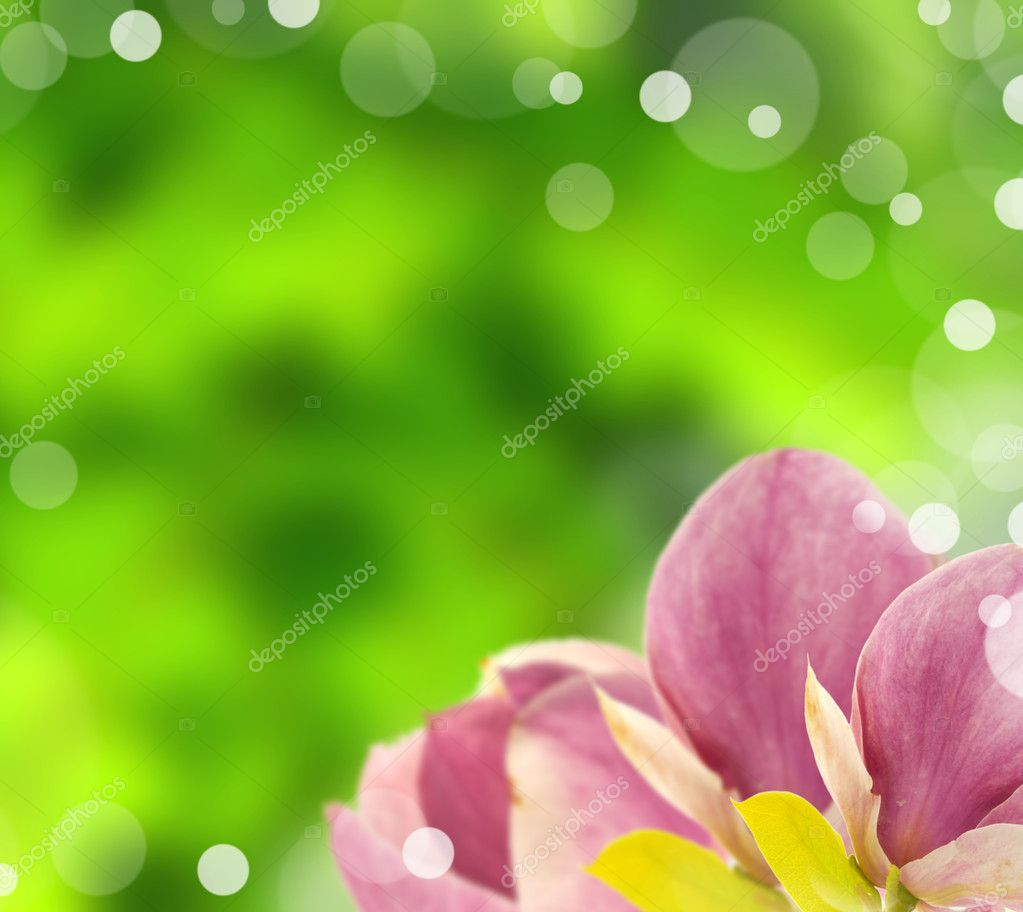 Purple dewy tulips on shiny blur green background — Stock Photo #6019199