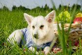 Perro de pradera — Foto de Stock