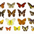 Butterflies — Stock Photo #6267199