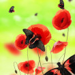 Butterflies in poppy field — Stock Photo #6267382