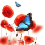 Butterflies in poppy field — Stock Photo