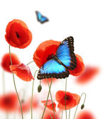 Butterflies in poppy field — Stock Photo
