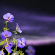 Evening flowers - Stock Photo
