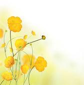 Meadow flowers — Stock Photo