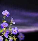 Evening flowers — Stock Photo
