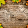Autumn motives - Stock Photo