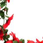 Poinsettia Border — Stock Photo
