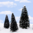 Evergreen Trees — Stock Photo