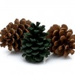 Pinecones — Stock Photo
