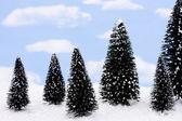 Evergreen Trees — Stock Photo