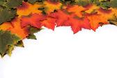Mevsim değişen — Stok fotoğraf