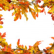 Fall leaves border — Stock Photo