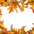 Stock Photo: Fall leaves border