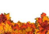 Herfstbladeren — Stockfoto