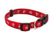 Dog Collar — Foto Stock