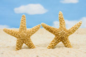 Starfishes — Stock Photo