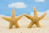 Starfishes — Stock Photo