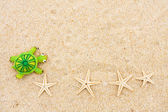 Starfish and Turtle — Stock Photo