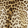 Royalty-Free Stock Photo: Leopard skin background