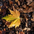 Stock Photo: Fall leaf