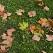 Stock Photo: Leaves on ground