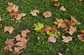 Leaves on ground — Stock Photo