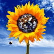 Sunflower world — Stock Photo