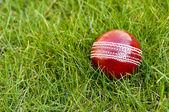 Cricket ball on grass — Stock Photo