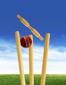 Cricket match — Stock Photo